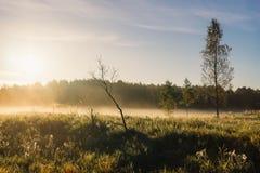 Salida del sol sobre prado brumoso Imagenes de archivo