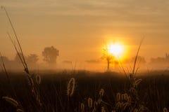 Salida del sol sobre prado en mañana de niebla Fotos de archivo