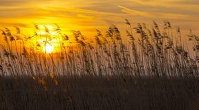 Salida del sol sobre un campo en invierno Fotos de archivo libres de regalías