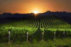 Salida del sol sobre viñedo Fotografía de archivo libre de regalías