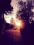Salida del sol a través de árboles y de la calle Fotografía de archivo