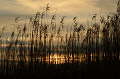 Salida del sol a través de la hierba de la playa Imágenes de archivo libres de regalías