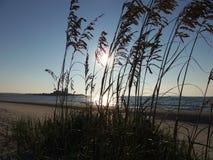 Salida del sol a través de la hierba del mar Foto de archivo