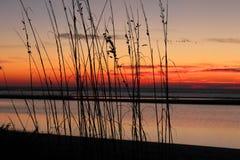Salida del sol a través de las cañas en la playa Imagenes de archivo