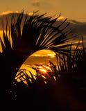 Salida del sol a través de las palmas Foto de archivo libre de regalías