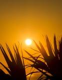 Salida del sol a través de las palmas i Fotos de archivo libres de regalías