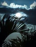 Salida del sol a través de las palmas XII Fotografía de archivo
