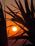 Salida del sol a través de las palmas XIX Imagen de archivo libre de regalías