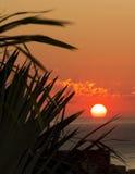 Salida del sol a través de las palmas XVII Foto de archivo libre de regalías