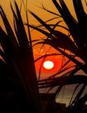 Salida del sol a través de las palmas XX Imagen de archivo libre de regalías