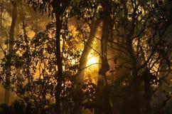 Salida del sol a través de MIsty Forest Imagen de archivo