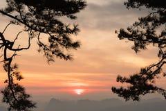 Salida del sol a través de ramas del pino en la mañana fotos de archivo