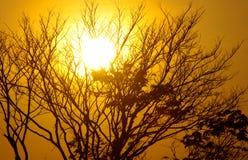 Salida del sol a través del árbol imagenes de archivo