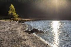 Salida del sol a través del bosque en el lago imagen de archivo libre de regalías