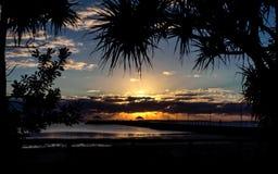 Salida del sol a través del Pandanus fotos de archivo libres de regalías