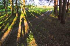 Salida del sol del verano en los prados de Dnieper fotografía de archivo libre de regalías