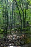 Salida del sol del verano en soporte de hojas caducas mojado Foto de archivo