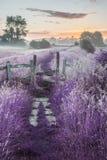 Salida del sol vibrante hermosa del verano sobre landsc inglés del campo Foto de archivo libre de regalías