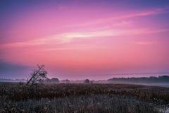 Salida del sol violeta sobre el lago misterioso Fotografía de archivo libre de regalías