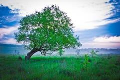 Salida del sol y árbol Foto de archivo libre de regalías