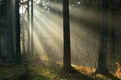 Salida del sol y bosque Imagenes de archivo