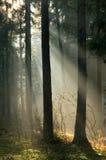 Salida del sol y bosque Imagen de archivo libre de regalías