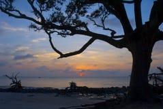 Salida del sol y driftwood Fotos de archivo libres de regalías