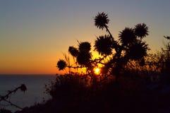 Salida del sol y flores secadas en Kamari, Santorini Fotos de archivo