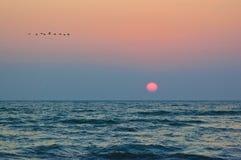 Salida del sol y pájaros, en la orilla del Mar Negro Imagenes de archivo