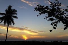Salida del sol y palmera y vacas en Sri Lanka Imagen de archivo libre de regalías