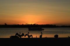 Salida del sol y pelícanos Foto de archivo libre de regalías