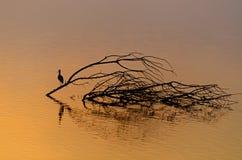 Salida del sol y reflexión hermosas de un pájaro en el lago del hagamon Fotos de archivo