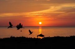 Salidas del sol en el mar Imágenes de archivo libres de regalías