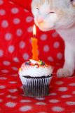 Salie cupcake royalty-vrije stock afbeelding