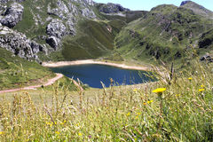 Saliencia& x27;s lake with flowers full of water in Asturias, Stock Photos
