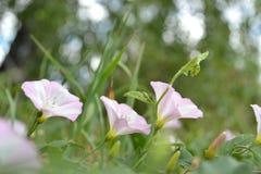 Saliendo las flores alrededor como Imagen de archivo