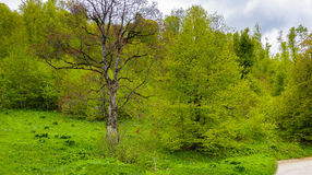 Salighet för natur` s royaltyfri fotografi