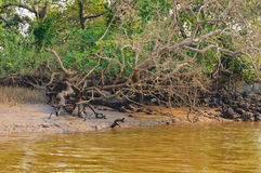 Salim Ali Bird Sanctuary, Goa, India Stock Photos