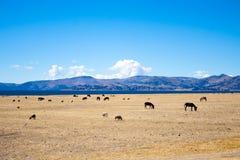 Salinas de Las, Perú Fotografía de archivo libre de regalías