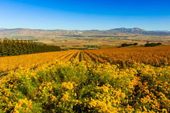 Salinas Valley Stock Image