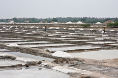 Saline in India. Saline workers in Tamil Nadu, India Royalty Free Stock Photo