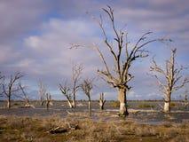 Saline lake Stock Images