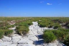 Saline soil Royalty Free Stock Image