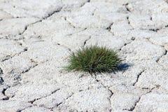 Saline soil Stock Image