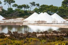 Salines in Mallorca Stock Photo