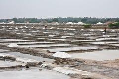 Salino em India Foto de Stock Royalty Free