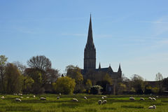 Salisbury Cathedral from Water Meadows, Wiltshire, England Stock Images