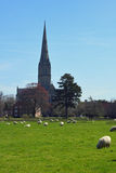 Salisbury Cathedral from Water Meadows, Wiltshire, England Royalty Free Stock Images