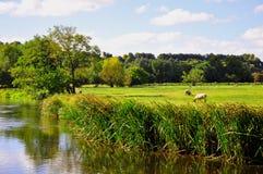 Salisbury vattenängar och flod Avon nära domkyrkan, Wiltshire, England Arkivbilder
