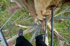Salita dell'albero di Gloucester fotografie stock libere da diritti